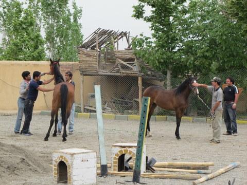 جفت گیری انسان اسب – درمانگر: سفر به کُردان – آرش نورآقایی | سایت شخصی